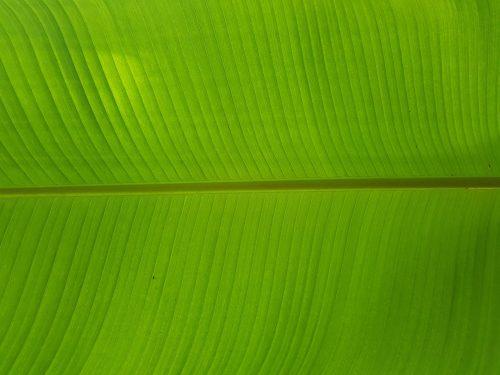 ירוקים ולא מבריאות איך תסלחו לעצמכם על קנאה